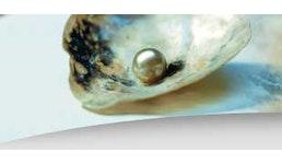 Aromen für Fischlockstoffe