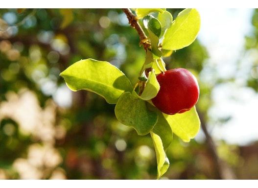 Pflanzenextrakte wie Acerola Extrakt und viele mehr.