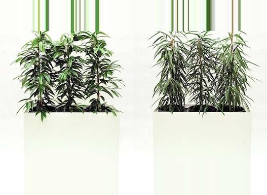 Bepflanzte Hydro Profi Line Gefäße mit Hydrokulturpflanzen