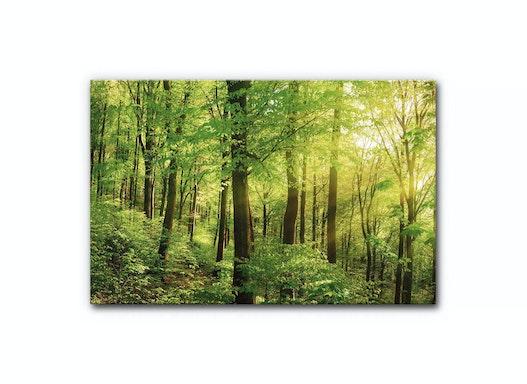 Schallschutz Akustikbild Wald (Teil 2 von 3)