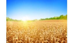 Weizenkeim-Extraktpulver [Wheat Germ Extract Powder]