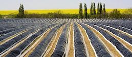 Agrarfolien: Spargelfolien