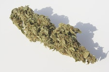 CBD-Blüten THC <0,2%