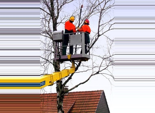 Baumfällung mit Arbeitsbühne