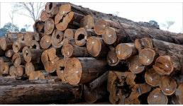 Fertig geschn. HOLZ zur Produktion von EUROPALETTEN , Bauholz, Baumstämme