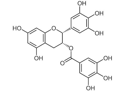 Epigallocatchingallat - EGCG - 97% GMP Qualität
