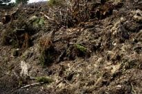 Abfallentsorgung Busch- und Gartenabfälle
