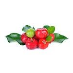 Acerola Extrakt, 25%  Vitamin C